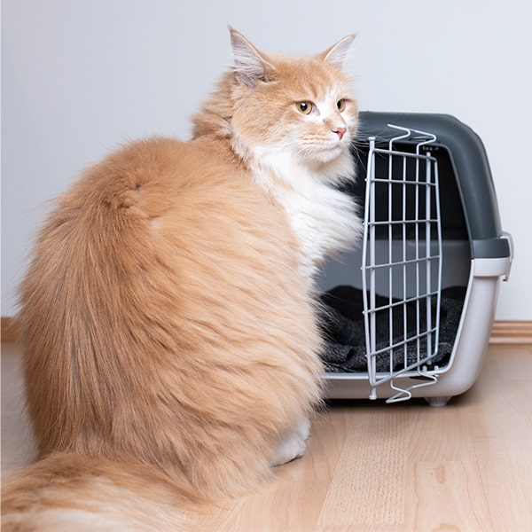 cat-out-of-the-cage