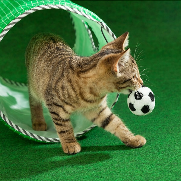 cat-with-soccer-ball