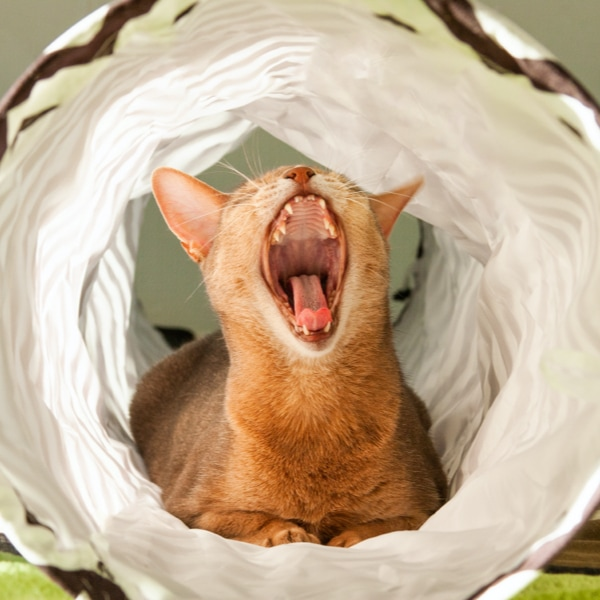 A cat in a foldable tunnel