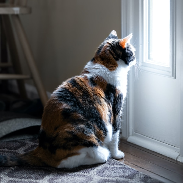 A cat looking out the window