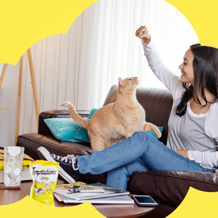 women and a yellow cat playing with a temptations treat